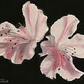 Azaleas by Sarah Parks