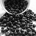 B And W Blueberries by Annette Allman