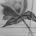 B W Wood Flower by Rob Hans
