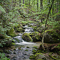 Babbling Baxter Brook by John Maciel