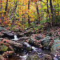 Babbling Brook by Christopher M Stewart