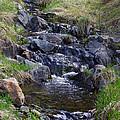 Babbling Brook by Gary Benson