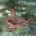 Baby Birds by Jennifer Dishon