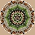 Baby Bison Mandala by Beth Sawickie
