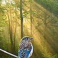 Baby Blue In Morning Fog Sunlight by Randall Branham