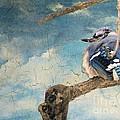 Baby Blue Jay In Winter by Janette Boyd