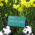 Baby Boomers by Ausra Huntington nee Paulauskaite