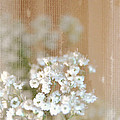 Baby Breath- Special Day by Darla Wood