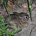 Baby Bunny by Deborah Good
