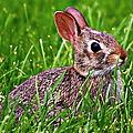 Baby Bunny by Elizabeth Winter