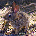 Baby Bunny by Heather Coen