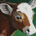 Baby Calf by Kristina Hauk