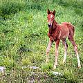 Baby Colt by Alexey Stiop