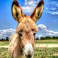 Baby Donkey by Anita Cumbra