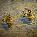Baby Ducks by LeeAnn McLaneGoetz McLaneGoetzStudioLLCcom