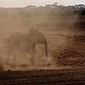 Baby Elephant  by Amanda Stadther