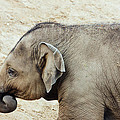 Baby Elephant by Pati Photography