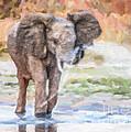 Baby Elephant Spraying Water by Liz Leyden