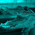 Baby Gator Turquoise by Rob Hans