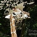 Baby Giraffe 2 by Heather Jane