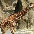 Baby Giraffe 4 by Heather Jane