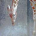 Baby Giraffe by Lizi Beard-Ward
