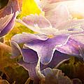 Baby Hydrangeas by Bob Orsillo