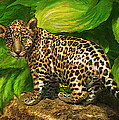Baby Jaguar by Jane Schnetlage