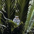 Baby Mockingbird by Howard Stapleton