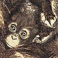 Baby Orangutan by Jane Schnetlage