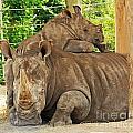 Baby Rhino And Mom by Terri Mills
