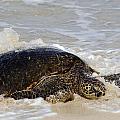 Baby Sea Turtle by Debra Casey