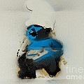 Baby Smurf by Barry Boom