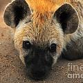 Baby Spotted Hyena by Daniela White