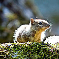 Baby Squirrel by Brian Williamson