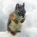 Baby Squirrel by Irina Hays