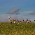 Babysitting - Antelope - Johnson County - Wyoming by Diane Mintle