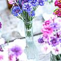 Bachelor Flowers by Cheryl Baxter
