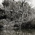 Back Bay Wildlife Refuge by MCM Photography