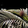 Back Bend Re-leaf by Mona Loy