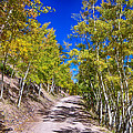 Back Country Road Take Me Home Colorado by James BO Insogna