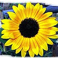 Back Forty Sunflower by Will Borden