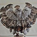 Back Kachina Eagle by Jay Milo