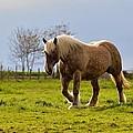 Back Light Horse by Patrick Pestre