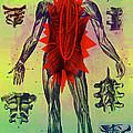 Back Problems by Dennis D Potokar