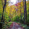 Back Road In The Adirondacks by David Patterson