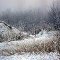 Back Woods Winter by Kathy Bassett