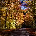 Backlit Canopy by Larry Landolfi