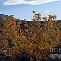 Backlit Desert Foliage by Bob Phillips