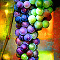 Backlit Grape Cluster With Textures by Carol Groenen